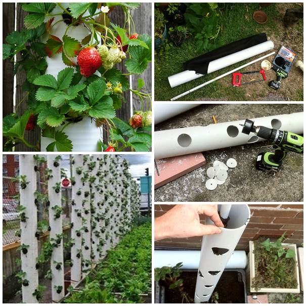 30-Creative-Uses-of-PVC-Pipes-in-Your-Home-and-Garden-5
