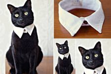 How-to-DIY-Easy-and-Classy-Cat-Collar-from-Old-Shirt