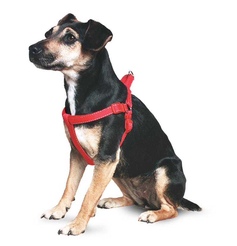 padded-dog-harness-223-p