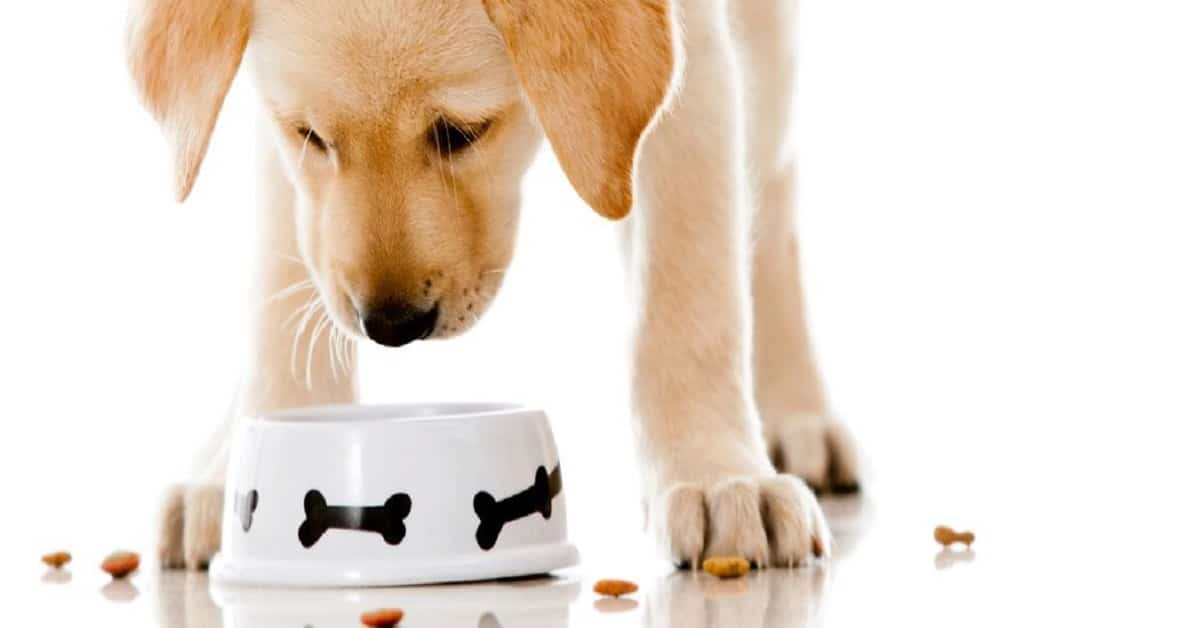 FREE Meal For Mutts Dog Sample