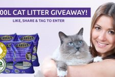 win-125-cat-litter-contest