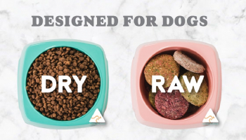 Free Petzyo Dog Food Samples