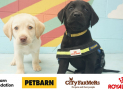Win a $2000 Petbarn/City Farmers Voucher & 12 months of ROYAL CANIN Dog Food